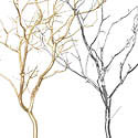 Gold and Silver Manzanita