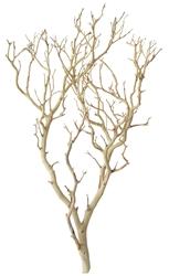 Sandblasted Manzanita Branch 30 Quot Tall Blooms Amp Branches